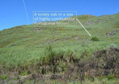 w1200_3b87_Lonely_Oak.jpg
