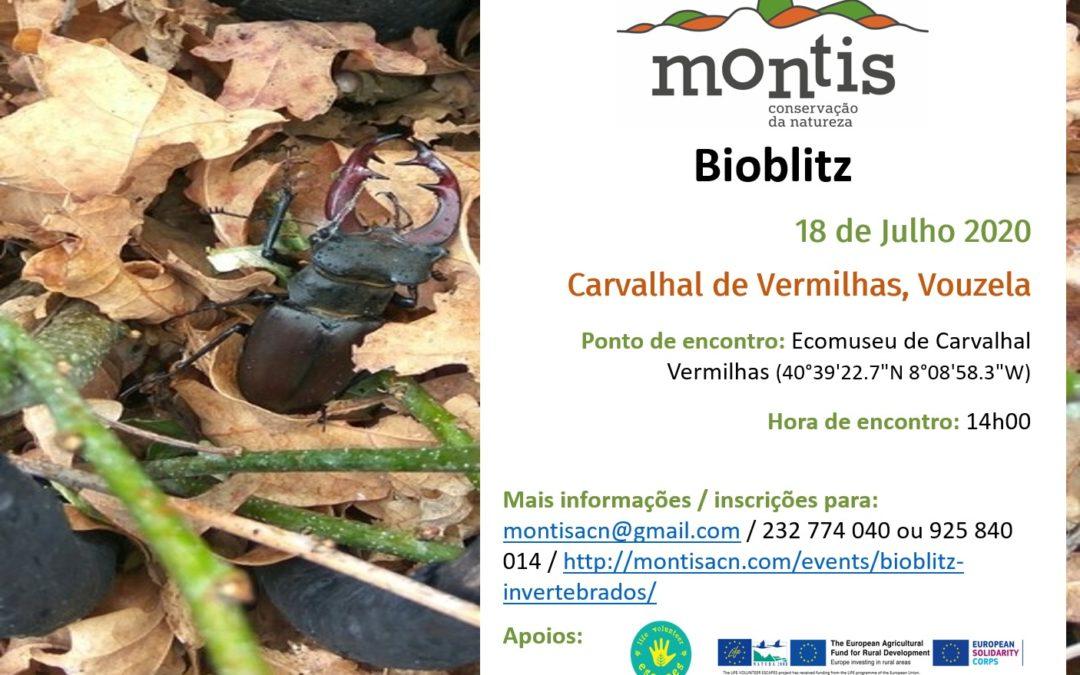 Bioblitz de Invertebrados