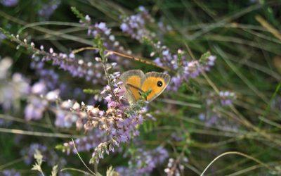 Passeio da biodiversidade