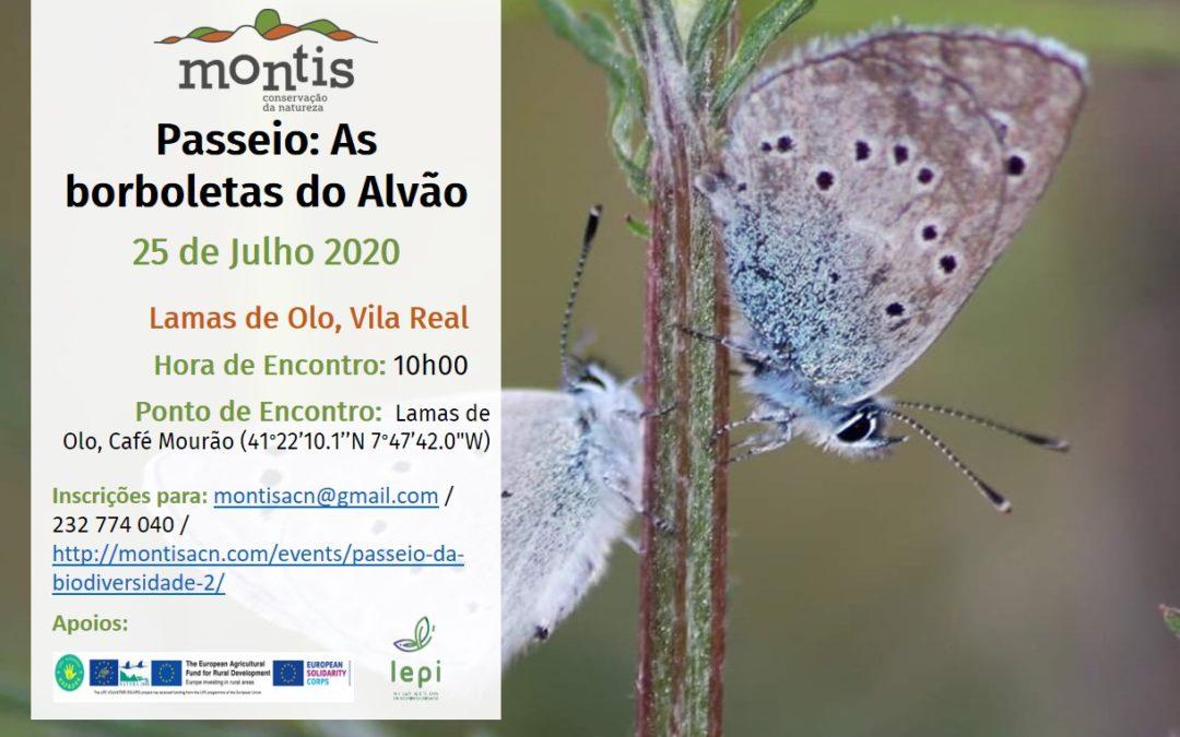 Passeio da Biodiversidade: As borboletas do Alvão