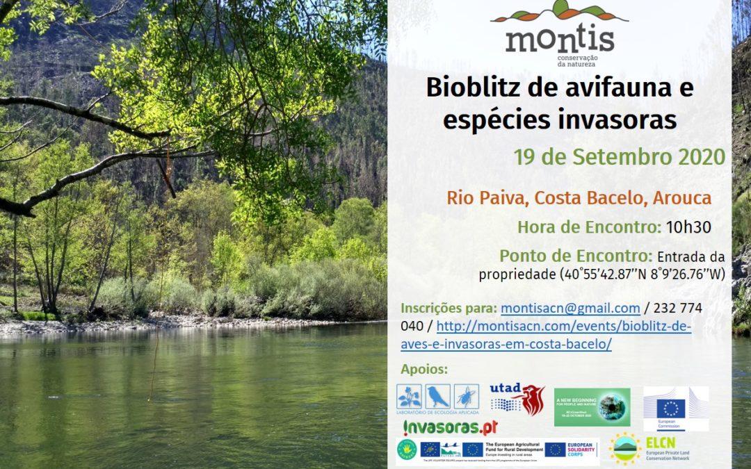 Bioblitz de avifauna e invasoras em Costa Bacelo