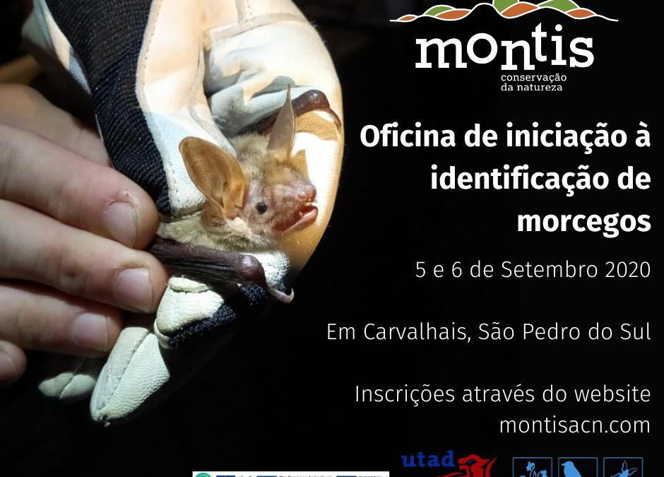 Oficina de iniciação à identificação de morcegos