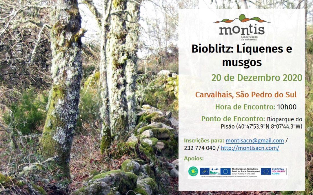 Bioblitz – Líquenes e Musgos