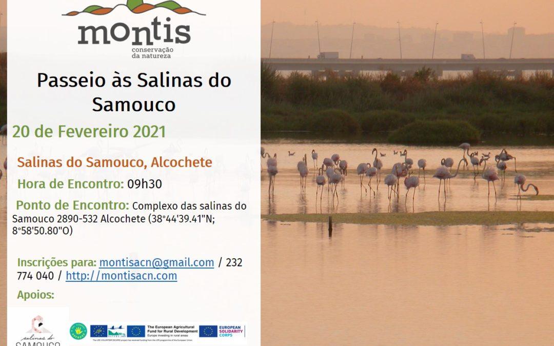 Cancelado – Passeio às Salinas do Samouco