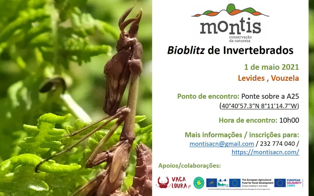 Bioblitz – invertebrados