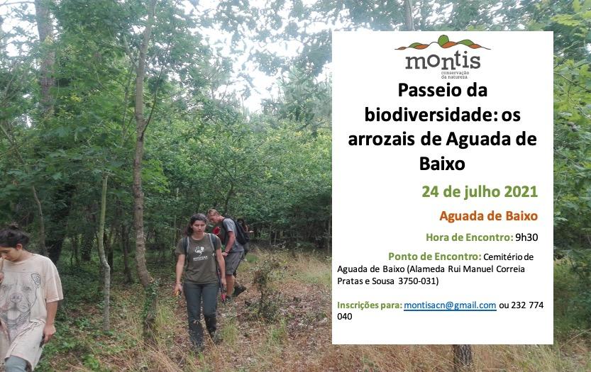 Passeio da Biodiversidade – Os arrozais de Aguada de Baixo